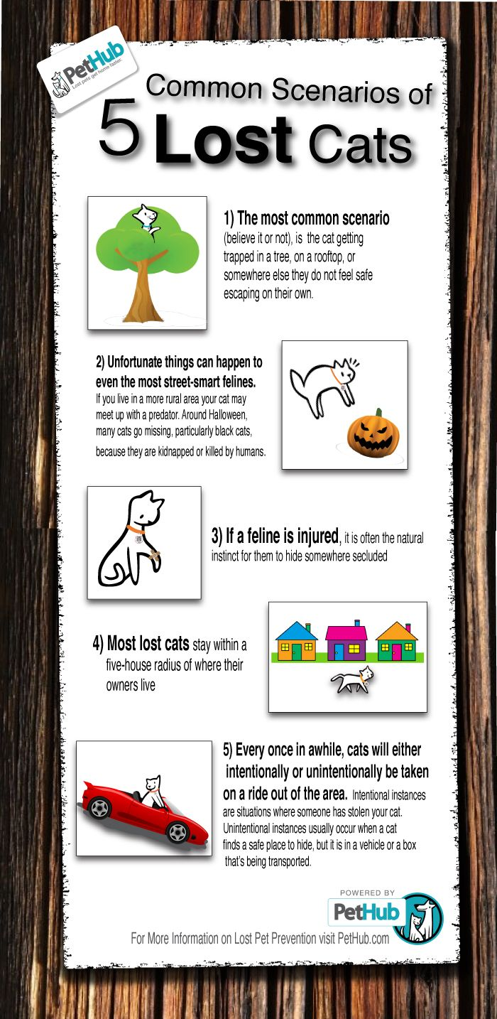 5 Common Scenarios of Lost Cats (Infographic) | PetHub