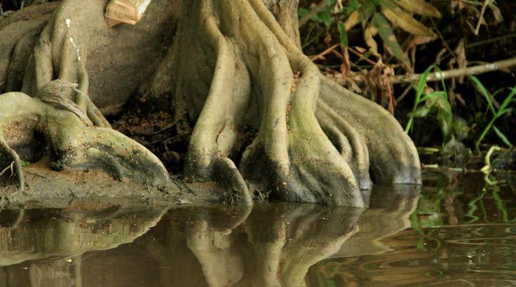 Santuario de Flora y Fauna Ciénaga Grande de Santa Marta | Parques Nacionales Naturales de Colombia