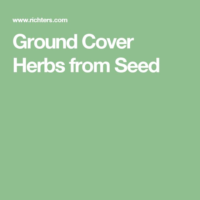 Ground Cover Herbs from Seed