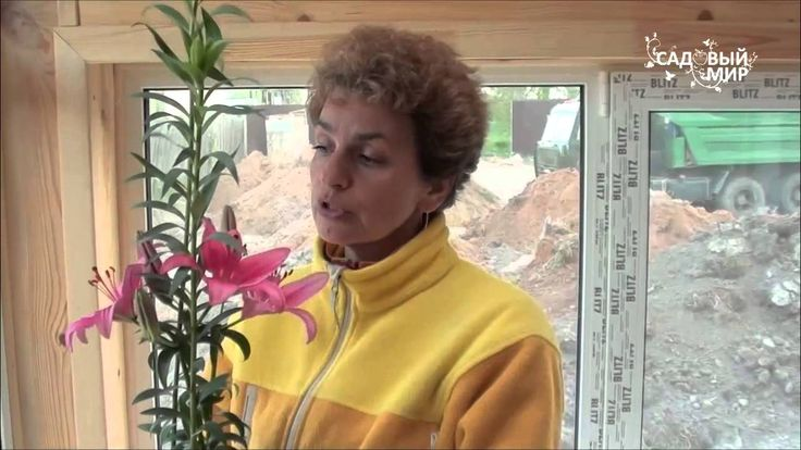 """Как сажать лилии с ростками. Сайт """"Садовый мир"""""""