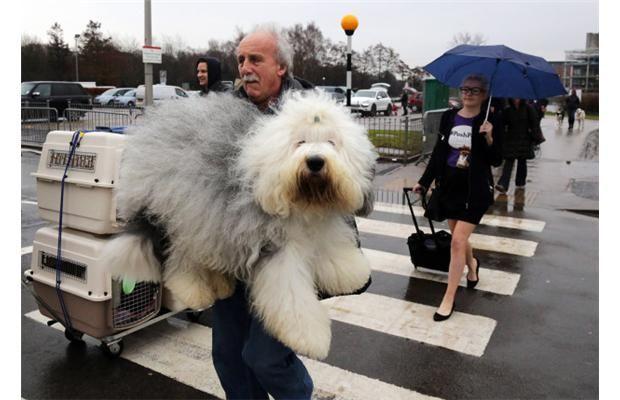 De grootste hond ter wereld!