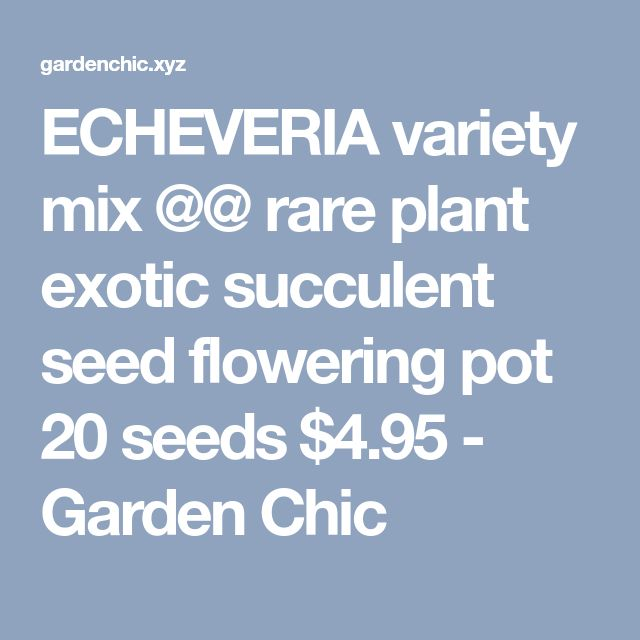 ECHEVERIA variety mix @@ rare plant exotic succulent seed flowering pot 20 seeds $4.95 - Garden Chic