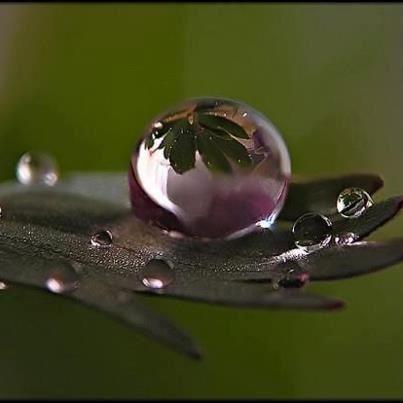 Dat is het wonder van de natuur, de planten, de harmonie erin en eigenlijk perfectie. Dat vind ik zo Mooi. Bij deze bijvoorbeeld een waterparel waarin een weerspiegeling is te zien van het blad (het is niet mijn eigen foto, maar geeft goed weer wat ik bedoel). Dit is een greep uit mijn wondere wereld. Door: Anouk Holthuis