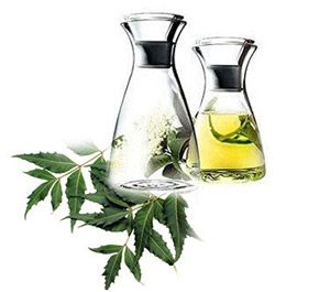 Olio di neem: benefici e proprietà dell'albero sacro indiano