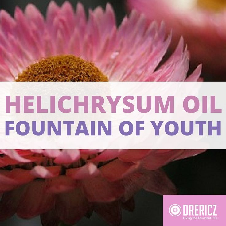 "Also called ""immortelle"" - the fountain of youth was an antioxidant-rich flower all along! It's no wonder helichrysum essential oil is so healing!"