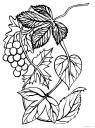 Vinná Réva-Hrozny-4