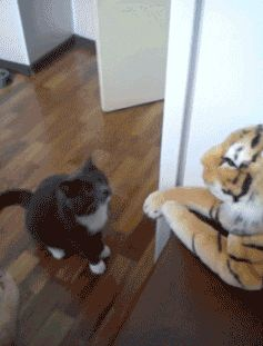 angry cat # fight # anger # going to beat you up!