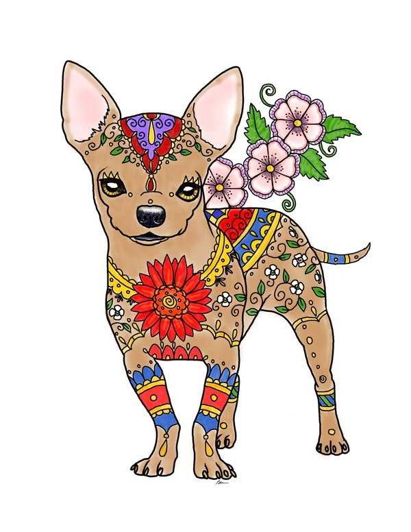 1000 Images About Art Of Chihuahua On Pinterest