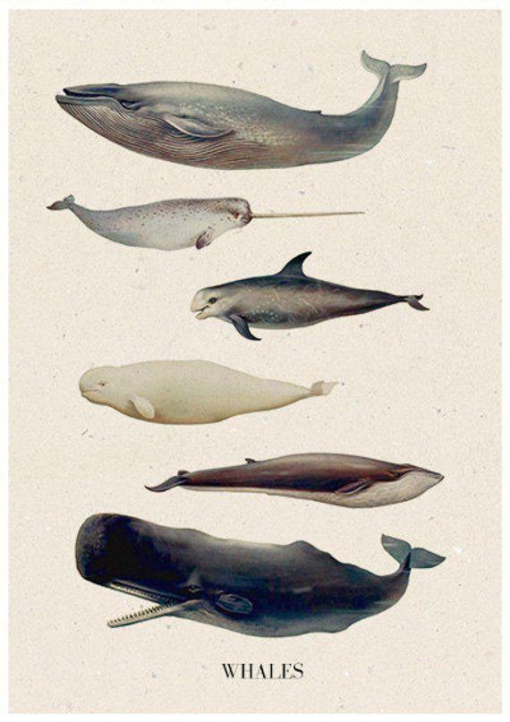 всем все виды китообразных картинки плетения