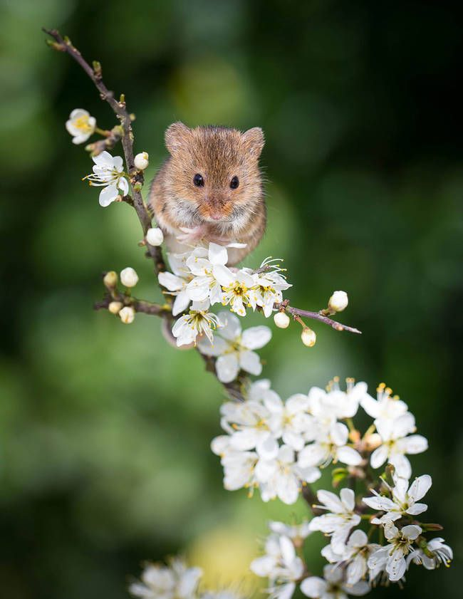 There's something perfect about teeny mice and teeny flowers.....by Paul Tymon