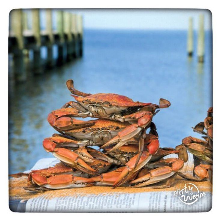 Summer is the best just saying. Whos ready for some crab pickin?   Photo cred. Washingtonian.com  #summer #crabs #flipflops #bikini #fishing #crabbing #boatlife #summer #outdoors #backwoods #funtime #redneck #countrygirl #countryboy #sunshine #loveit Photo cred. Washingtonian.com#raw #fitness #beachside #boatdock
