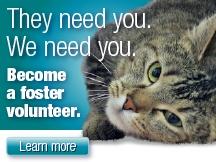 Foster or Volunteer or ADOPT!