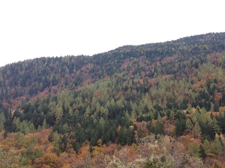 Wood, mountain autumn