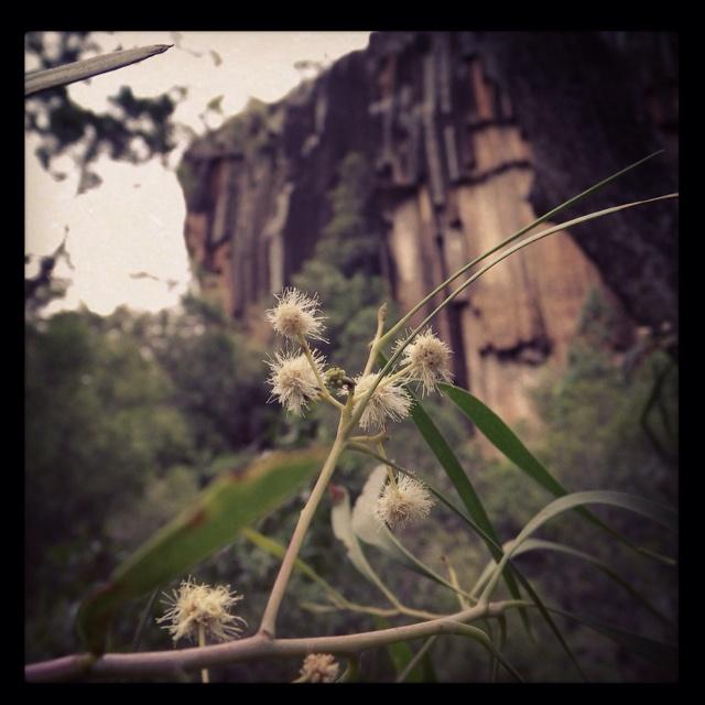 Sawn Rocks, Narrabri