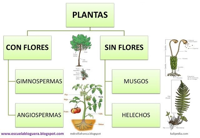 Escuela bloguera: Clasificación de las plantas