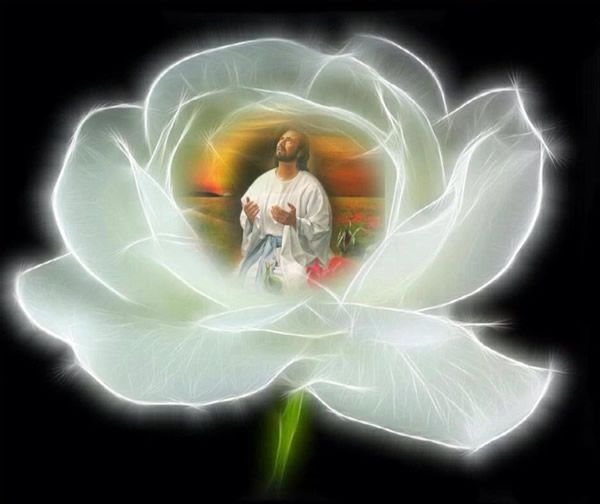 Resultado de imagem para llama rosa jesus