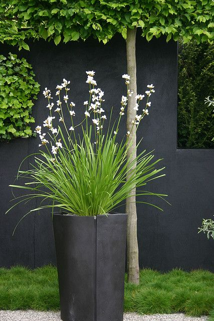 Black Planters & Wall