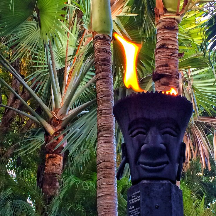 Tiki Torch Florida Keys Beach Life -Florida Palm Trees - Florida Type Palm Trees Suitable for the Florida Type Weather. Florida has many different climates suited for many palm trees and plants. Please See Below For Palm Trees to Suit Your Area/Region. Florida Date Palms - Florida Indoor Palms - Florida Cold Hardy Palms - and Florida Tropical Palms available at RealPalmTrees.com - Buy The Right Palm Tree at The Palm Trees Store #RealPalmTrees #BuyPalms #BuyPalmTrees #PalmStore…