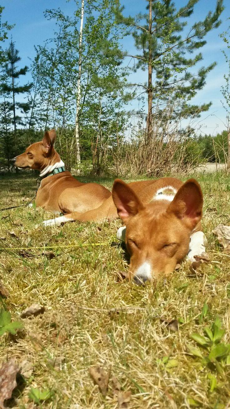 Ruska and Taika enjoying the sun