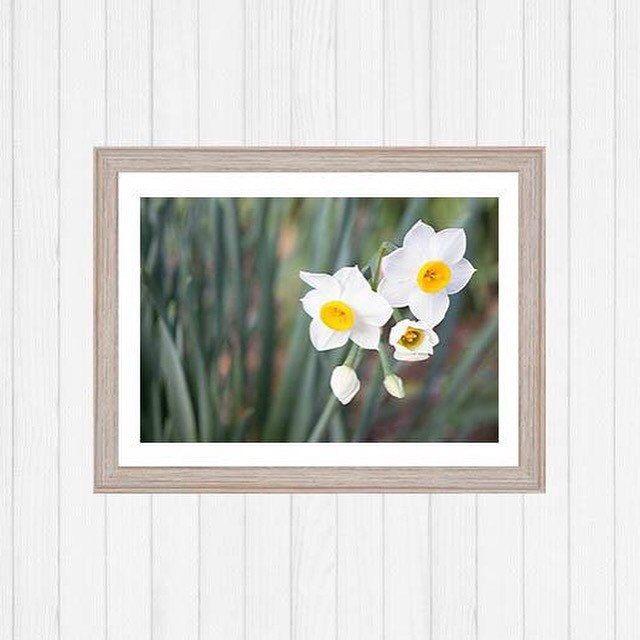 Framed flowers nature wall art