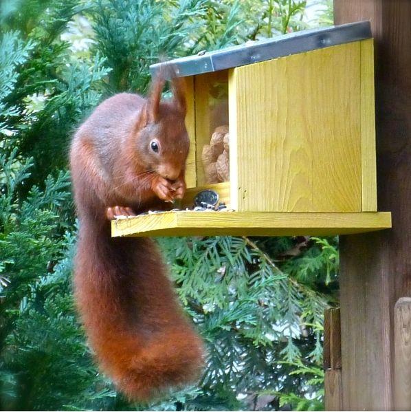 Profi für Vogelhaus Insektenhotel Futterhaus Nistkasten Vogelfutter-Ein Heim für Tiere schaffen