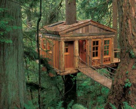Among the lodgings offered at Treehouse Point in Issaquah, Washington, Temple of the Blue Moon looks like a rustic cabin that has been elevated dozens of feet up a 300-year-old, 160-foot-tall Sitka Spruce tree. In addition to a rope bridge and a balcony, this treetop getaway features skylights and built-in cedar beds.