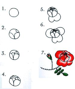 13 best rose images on pinterest how to draw draw for How to draw a rose step by step for beginners