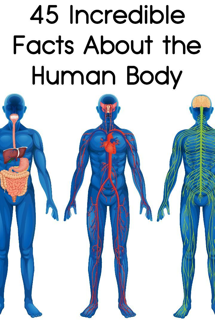 Anatomy facts about the human body