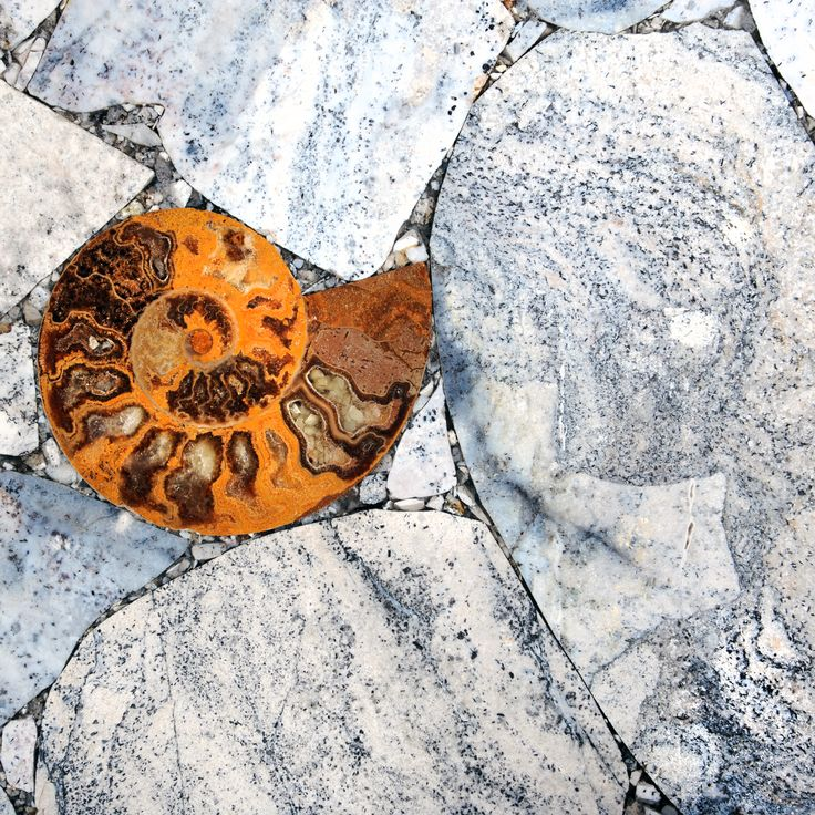 Agate Moss with ammonites