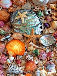 Seashells Gif colorful water animated pretty sea gif flowing
