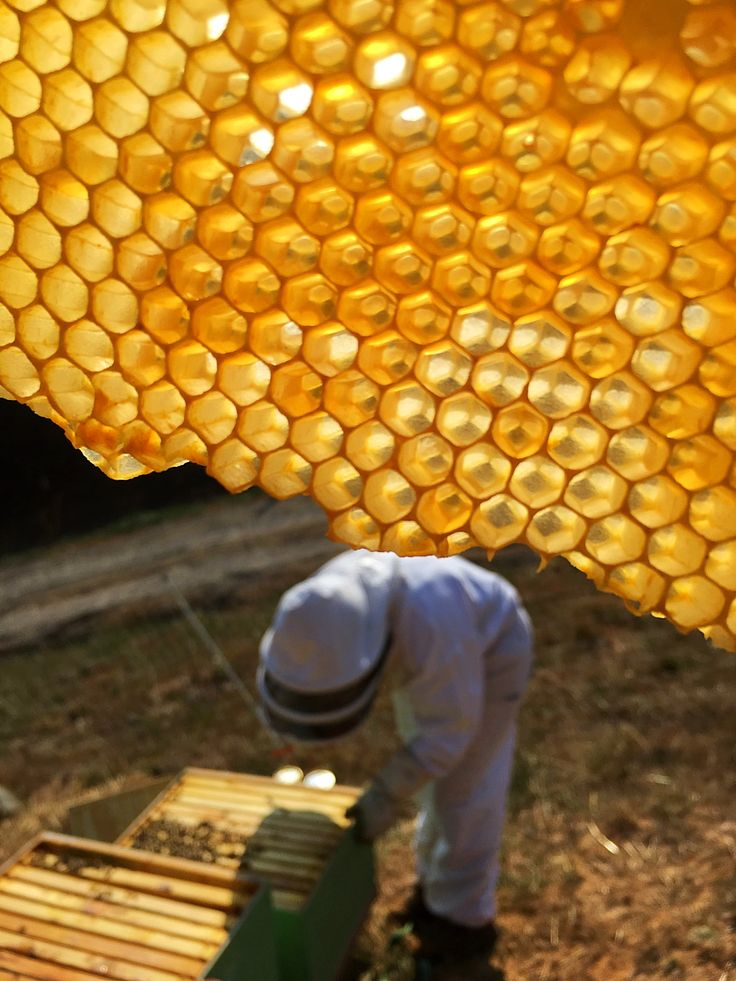 Going through the hives in the late fall for our Asheville Bee Charmer bees