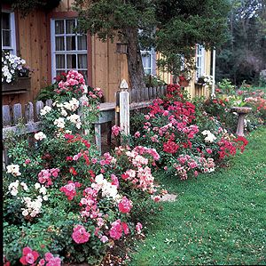 27 Best Images About Ideas To Make A Rose Garden On