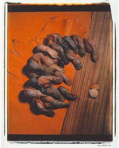 "Helen Chadwick ""Meat Abstract No. 2: Tongues"" (1989) Fotografía polaroid y seda Medidas: 81x71 cm"