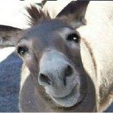 que es una mula