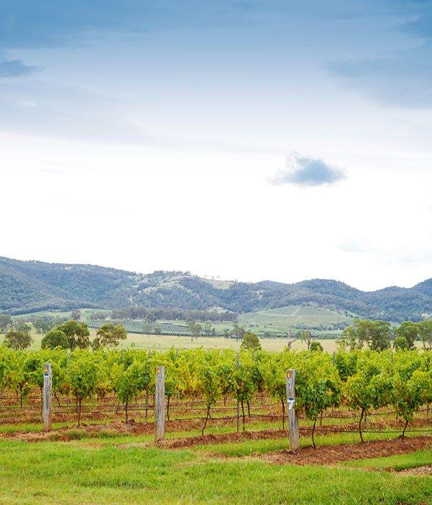 Great wine drive: Hunter Valley :: Gourmet Traveller Magazine Mobile