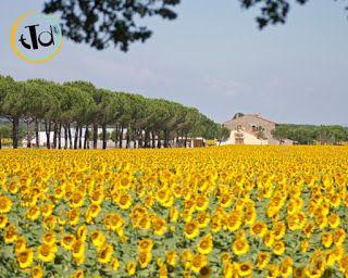 Nella zona di Arezzo, invece, più precisamente dalle terrazze di Cortona, centro turistico di rilievo nella val di chiana, possiamo ammirare ampi campi di girasoli. Crotona è di origine etrusca e in giro per la città possiamo trovare alcuni resti di quel periodo.
