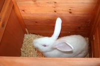 How to Make a Rabbit Cage: 10 steps - wikiHow