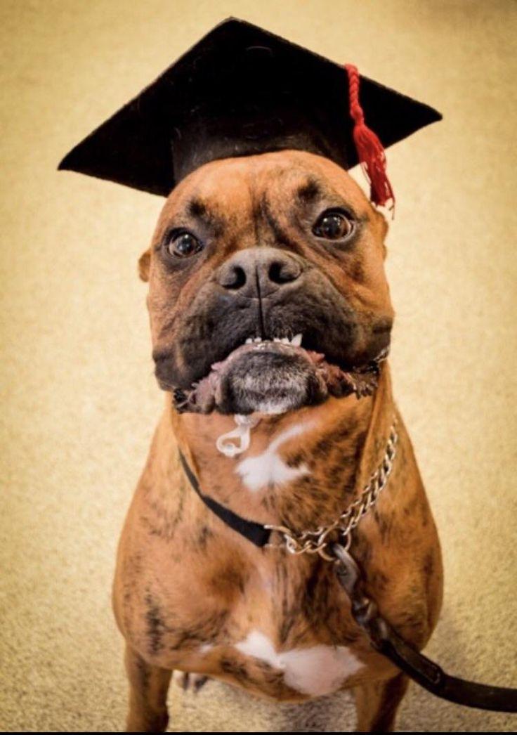 Boomer graduated puppy school today :)