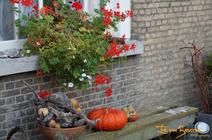Begijnhof, Breda, The Netherlands  http://nl.wikipedia.org/wiki/Begijnhof_%28Breda%29