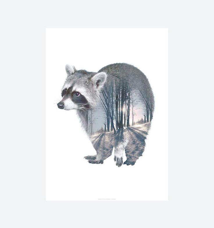 """RACOON - Faunascapes - Plakaten """"Racoon"""" fås i størrelserne A3 og 50x70 cm. Plakaten med motiv af en vaskebjørn er en del af serien Faunascapes designet af WhatWeDo. Serien består af diverse dyremotiver, landskaber og vise ord og har alle et nordisk udtryk både i motiv og farvevalg. Motiverne er """"gennemsigtige"""" så den smukke natur får lov at skinne igennem."""