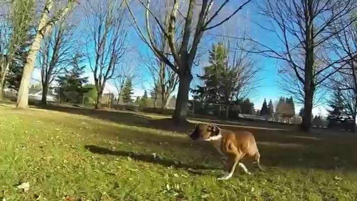 Il cane con due zampe che corre per la prima volta