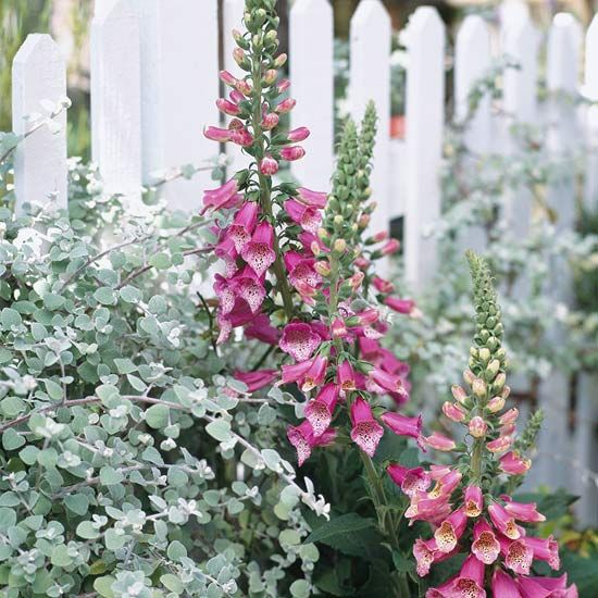 Fit in a White-Picket Fence Cottage garden style