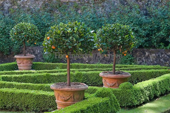 A formal box parterre in the gardens is punctuated with clipped orange trees in large terracotta planters