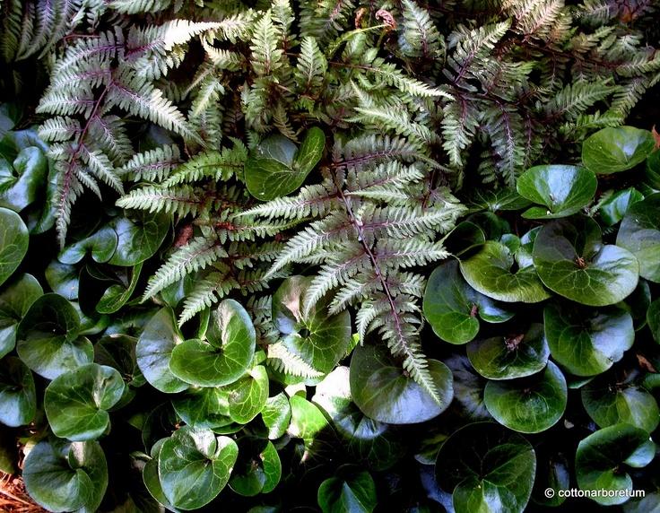 Best Schattengarten Images On Pinterest Shade Plants Plants