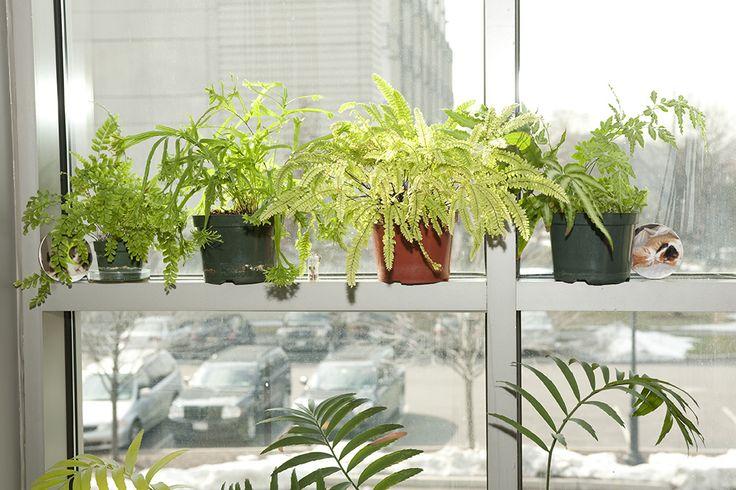 145 best images about des foug res dans mon salon ferns for Garage ad fougeres