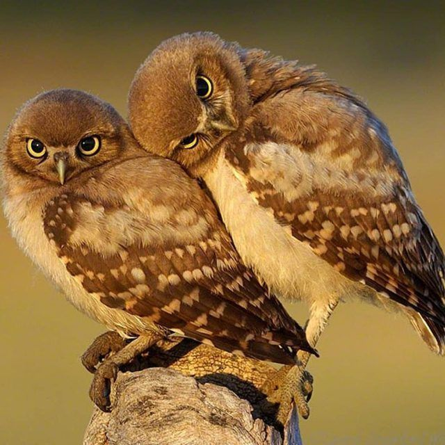 12 Of The Cutest Owls To Ever Owl