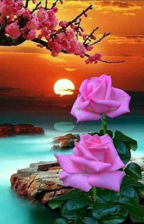 Pin De Marina 123 Em Kartinki Bela Rosa Rosas Lindas Paisagens