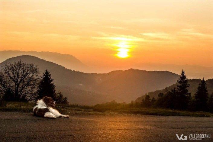 Landscape Predeal - Trei Brazi http://valigreceanu.ro/portofoliu-fotograf/landscape/