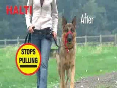 Dog Training with a Halti Collar - Intro (www.K9-1.com) - YouTube