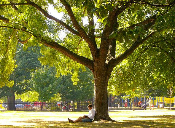 Trinity Bellwoods Park - one of the hippest public spaces in Toronto